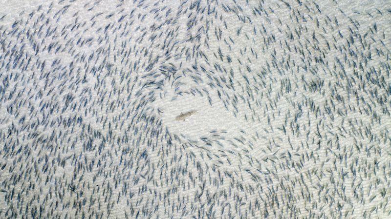 'Mada'in Saleh', por Gabriel Scanu