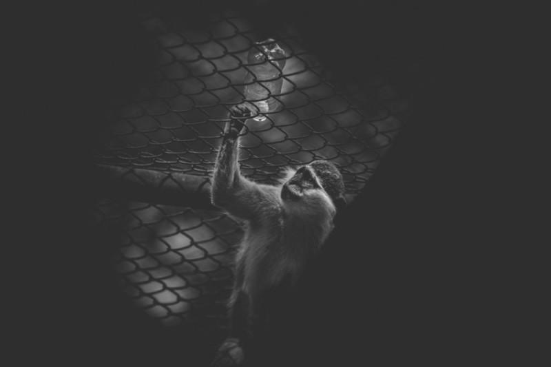 Fotografías de dolor de los animales