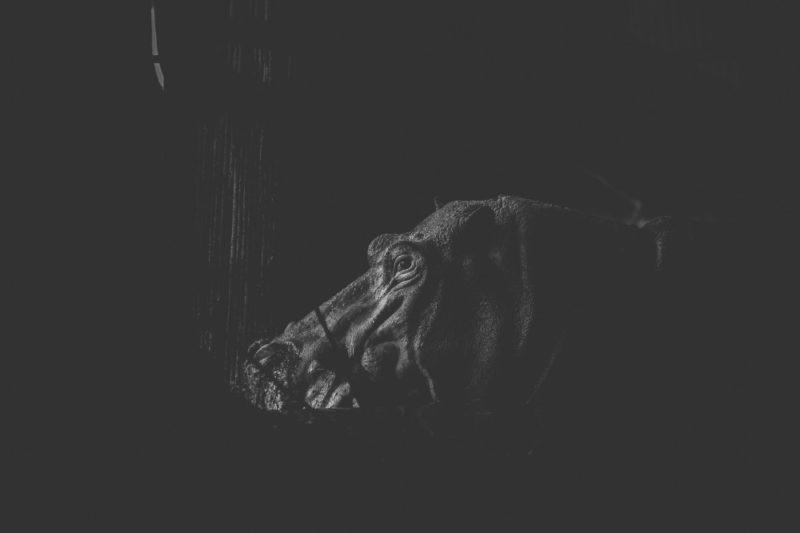 Fotografías de dolor de los animales por ShafiquI Islam