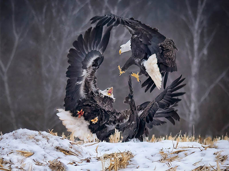 Fotografías finalistas de Sony World Photography Awards 2019