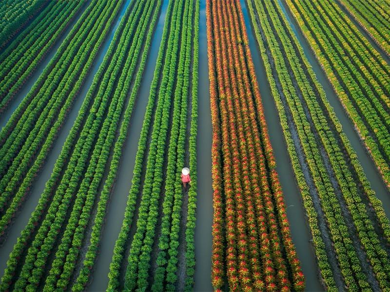 fotografías de la cosecha a través del lente de Trung Huy Pham