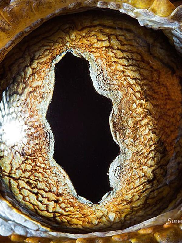 Fotografía de la exótica belleza de los ojos de la fauna animal.